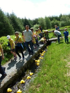 millstreet country park may14 084