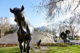 animals in war memorial 1