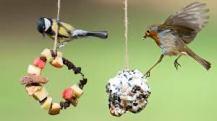 bird feeder 4