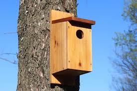 birds house 2
