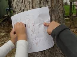 tree bark rubbings